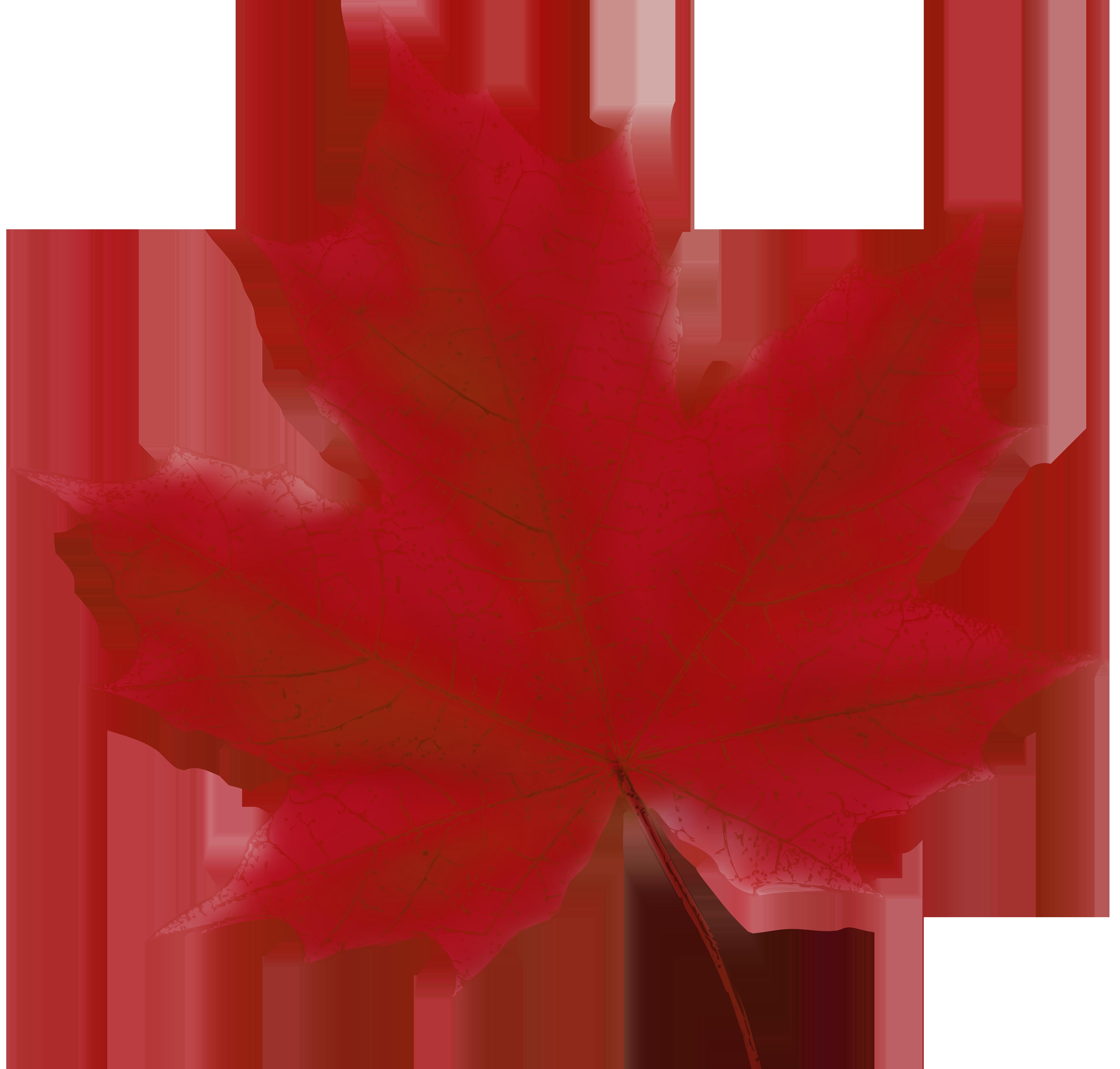 Maple Leaf Red PNG Clip Art Image.