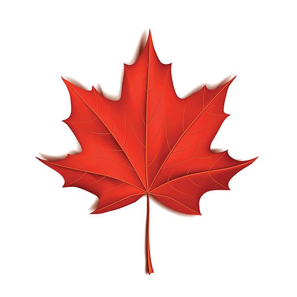 Best Canadian Maple Leaf Illustrations, Royalty.