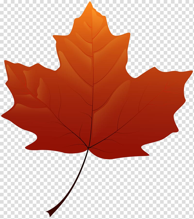 Maple leaf Yellow , autumn leaves transparent background PNG.