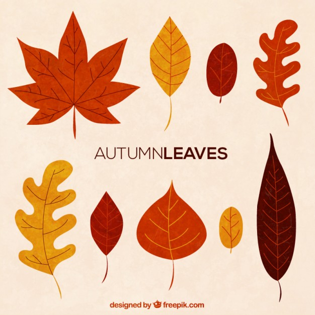 Maple Tree Vectors, Photos and PSD files.