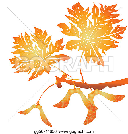 Clipart Maple Tree With Falling Seeds.