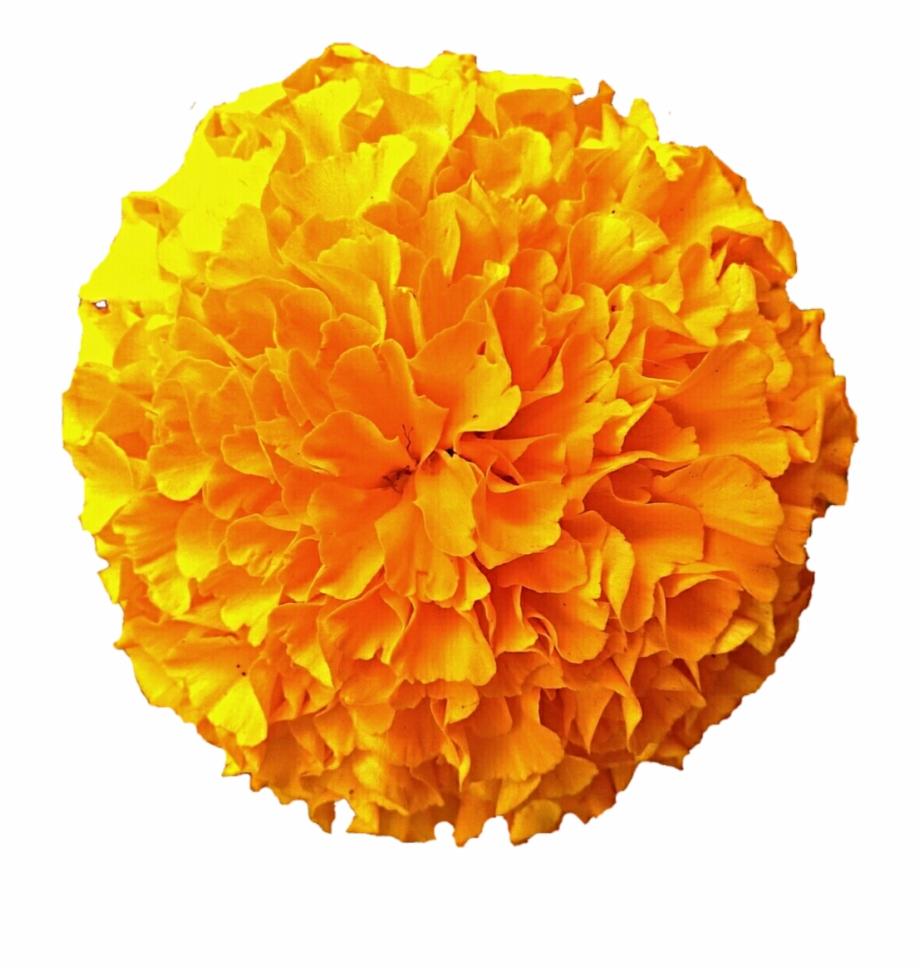 Gold Pom Pom Marigold By Jeanicebartzen.