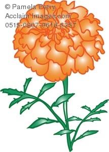 Orange Marigold Flower Royalty.