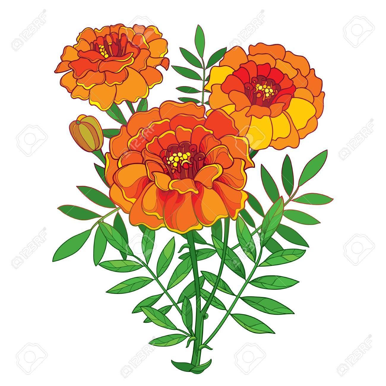 Marigold flower clipart 6 » Clipart Portal.