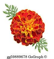 Marigolds Clip Art.