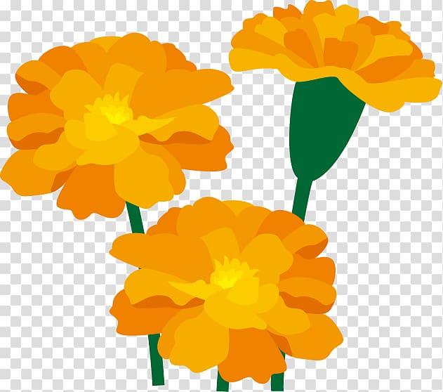 Marigold Flower Art , marigold transparent background PNG.