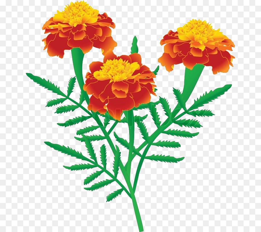 Marigolds clipart 7 » Clipart Station.