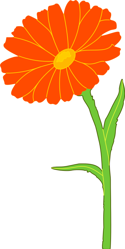 Free Clipart: Marigold.