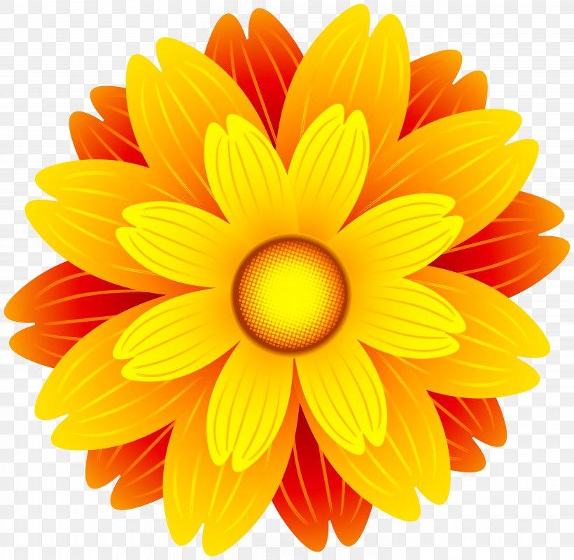 Flower Orange Clip Art, PNG, 6000x5849px, Flower, Chrysanths.