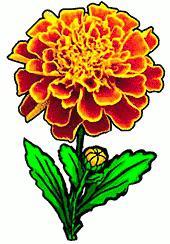 Free Marigold Cliparts, Download Free Clip Art, Free Clip.