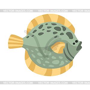 Flat Flounder Fish, Part Of Mediterranean Sea Marin.