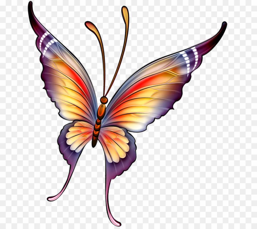 Color Siluetas De Mariposas PNG Butterfly Drawing Clipart download.