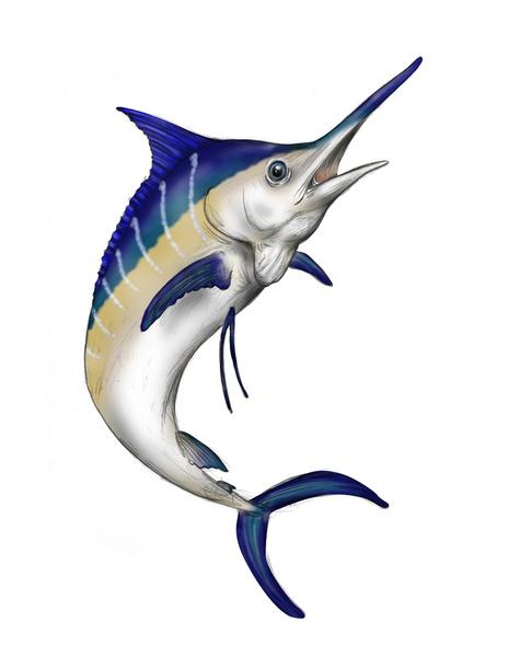 Free Marlin Cliparts, Download Free Clip Art, Free Clip Art.