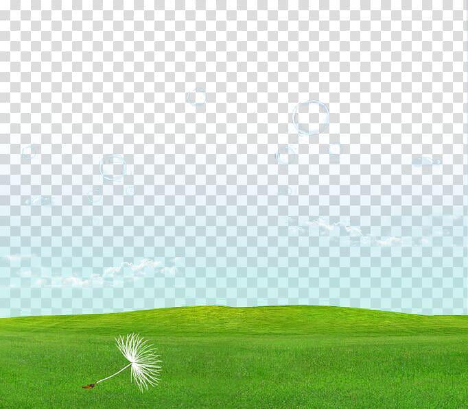 Taraxacum coreanum Dandelion , Dandelion meadow transparent.