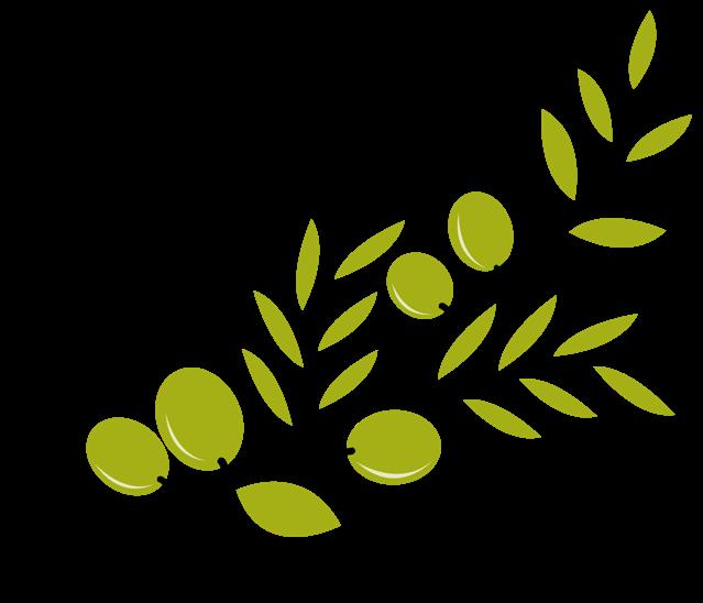 Olive branch Mediterranean cuisine Clip art.