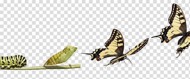 Butterfly Change management Organization Caterpillar.