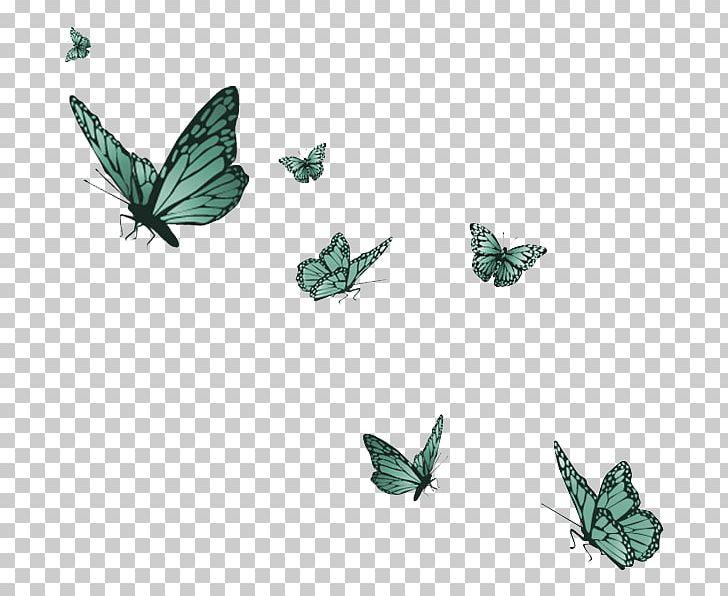 Butterfly Metamorphosis Desktop PNG, Clipart, Blue.
