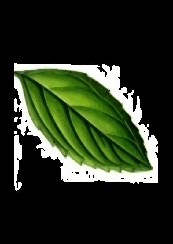 Free Clipart: Mint Leaf.