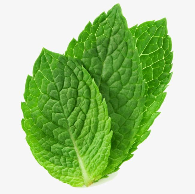 Three Mint Leaves PNG, Clipart, Chewing, Green, Gum, Leaves.