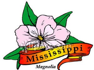 State Flower of Mississippi, the Magnolia Royalty Free.