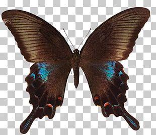 Papilio Arcturus PNG Images, Papilio Arcturus Clipart Free.