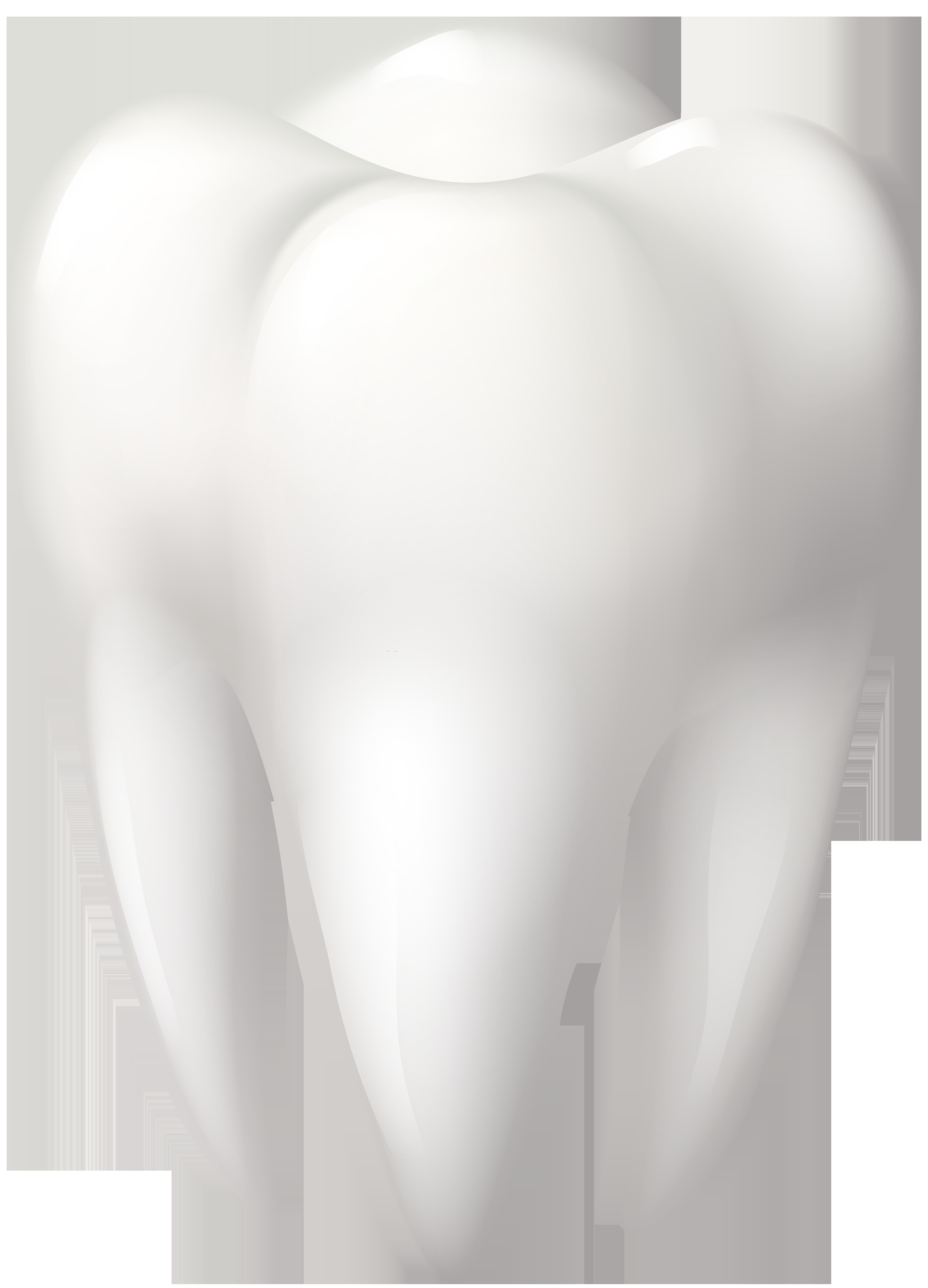 Tooth Molar PNG Clip Art.