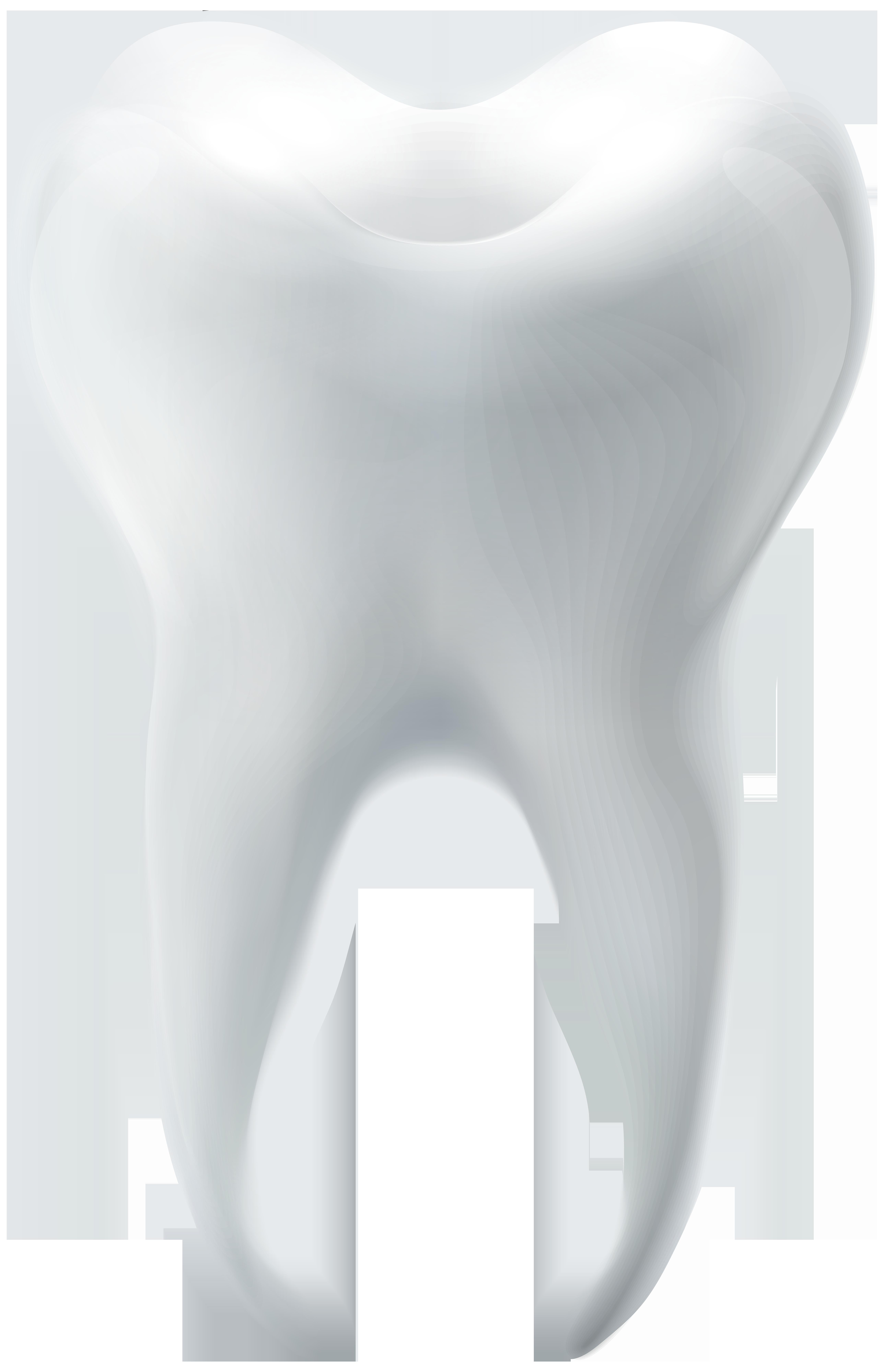 Molar Tooth PNG Clip Art.