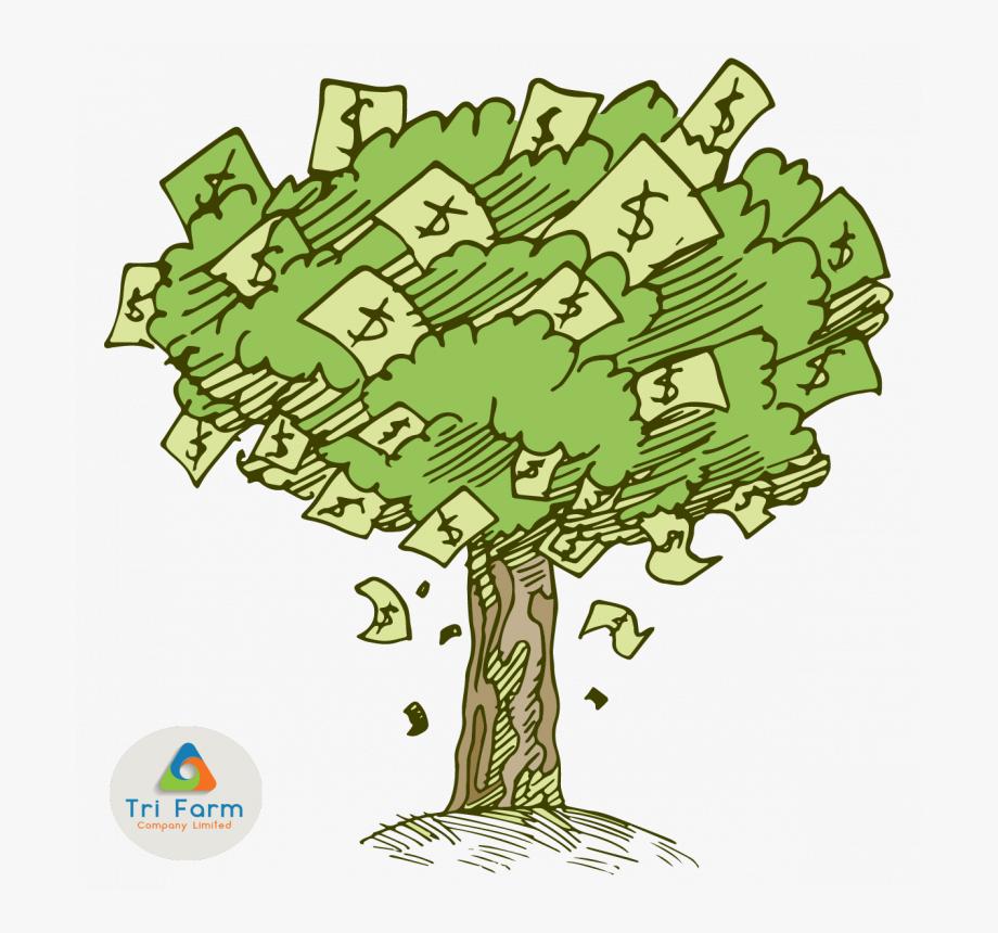 Money Tree Png.