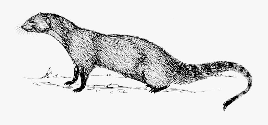 Clip Art Mongoose Images.
