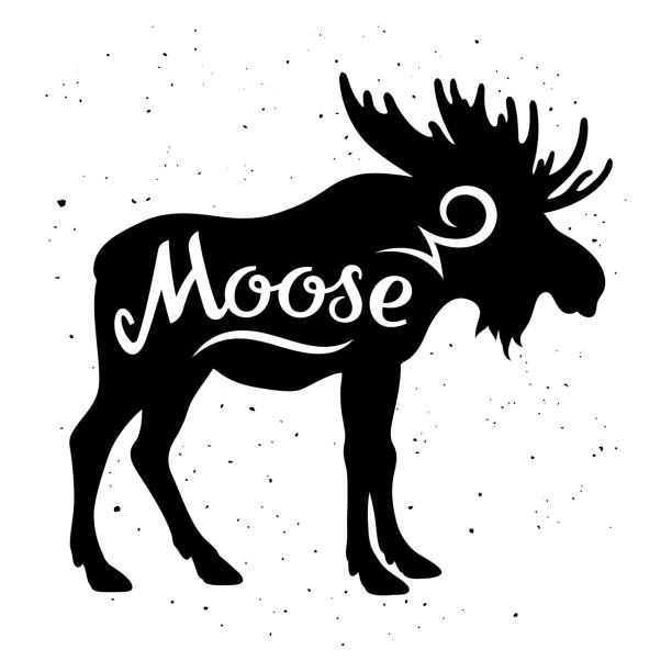 Best Moose Illustrations, Royalty.