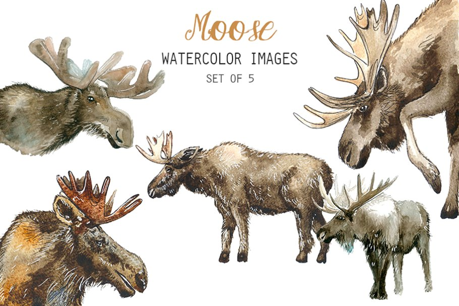Watercolor Moose Clipart.