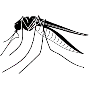 Free Mosquito Clipart Black And White, Download Free Clip.