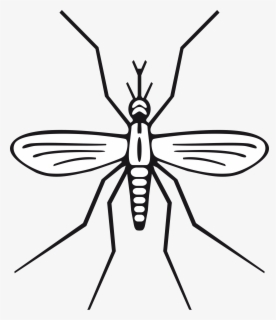 Free Mosquito Clip Art with No Background.