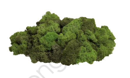 Green Moss, Green, Moss, Explore PNG Transparent Image and Clipart.