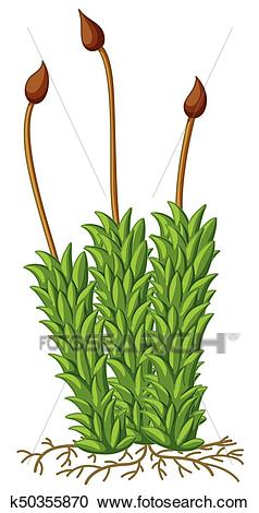 Moss plant with roots Clipart.
