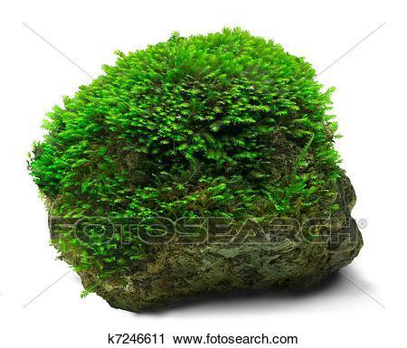 Moss clipart 2 » Clipart Portal.