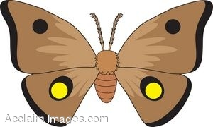 Moth clipart » Clipart Station.