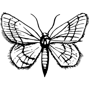Moth 2 clipart, cliparts of Moth 2 free download (wmf, eps.