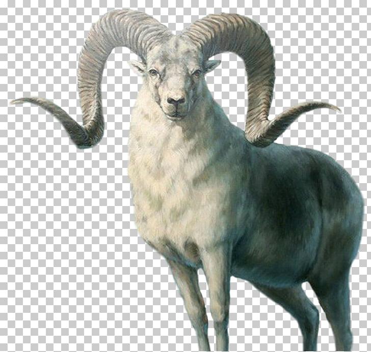 Marco Polo sheep Armenian mouflon Sheepu2013goat hybrid Ovis.