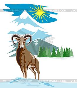 Mouflon Sheep Mountain Goat.
