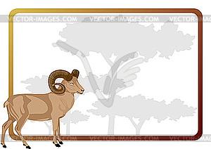 Frame with mouflon.