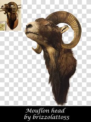 Mouflon transparent background PNG cliparts free download.