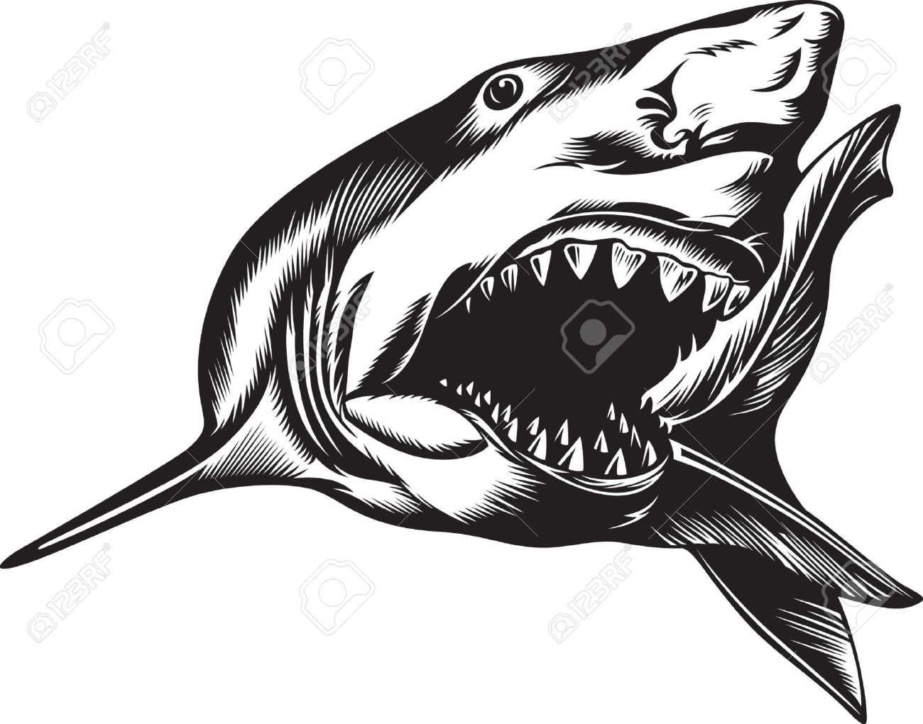 Big Aggressive Shark With Open Mouth Royalty Free Cliparts.