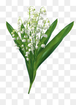 Muguet PNG and Muguet Transparent Clipart Free Download..