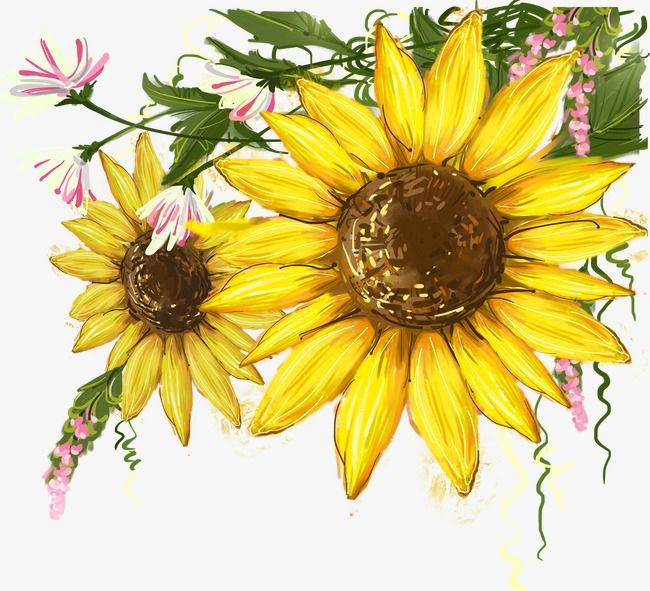 Sunflower Mural, Sunflower Clipart, Sunflower, Sunflower.