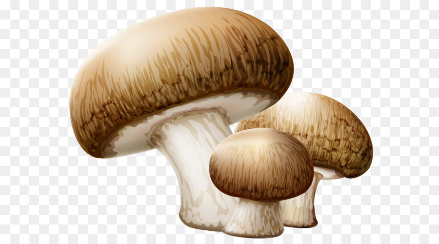Common Mushroom Mushroom png download.