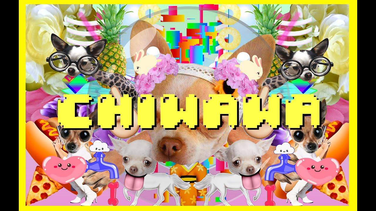 CHIWAWA SONG.