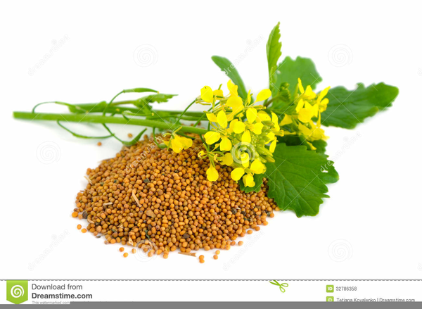 Free Mustard Seed Clipart.