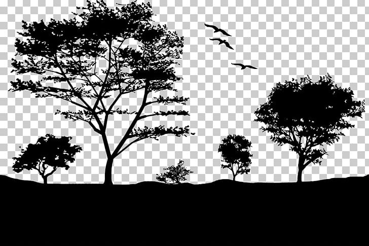 Landscape Light Sunset Nature Tree PNG, Clipart, Black And.
