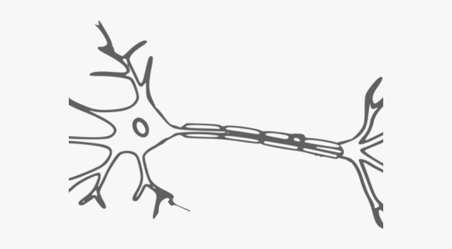 Nervous System Cliparts.